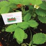 Come fare le etichette personalizzate per le piante