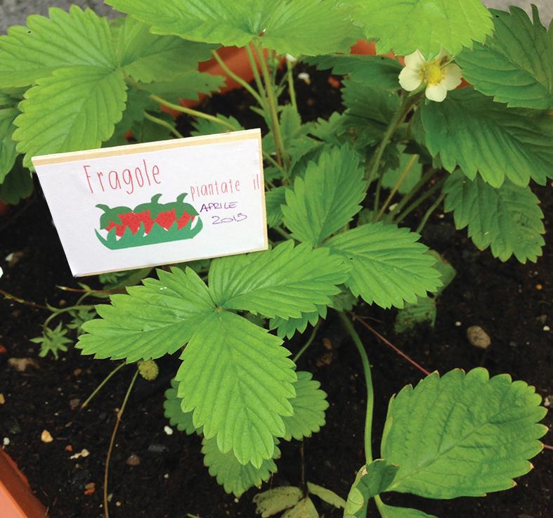 Etichette per piante come fare le etichette personalizzate for Cartellini per piante