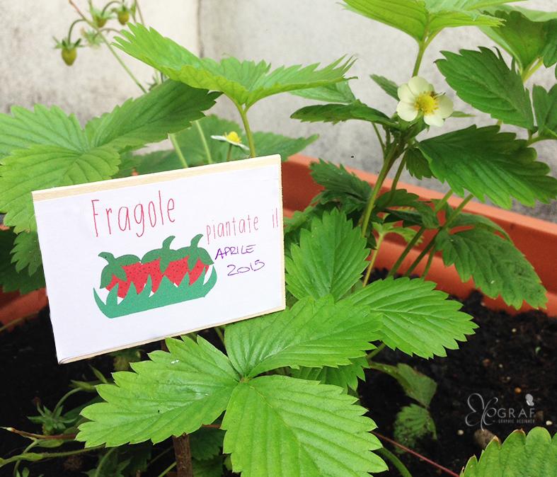 Come fare le etichette personalizzate per le piante for Cartellini per piante