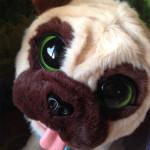 Un cagnolino per natale: finto