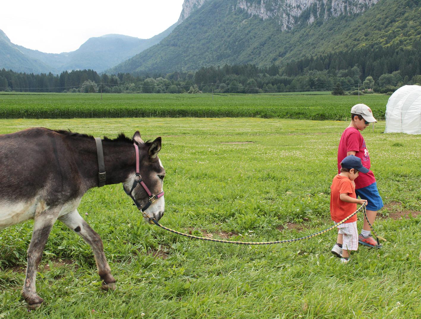 Agrilife Comano